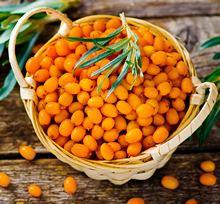 Приготовление масла из свежих ягод облепихи